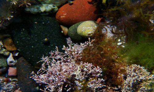 Zdjęcie SZKOCJA / poludnio - wschodnie wybrzeze Szkocji / Dunbar / kolorystyka  podwodnego swiata