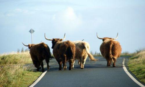 Zdjecie SZKOCJA / Wyspa Skye / Trotternish / Single track road... a mijanka daleko;)