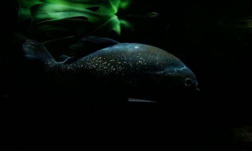 Zdjęcie SZKOCJA / East Scotland / Edinburgh - okolice / Deep Ocean Edinburgh,czyli namiastka nurkowania