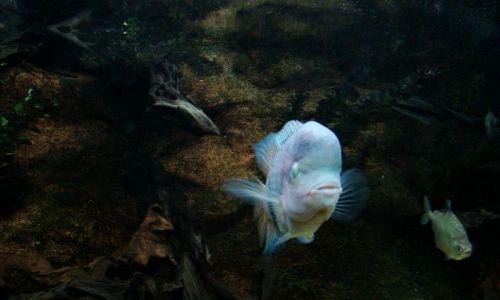 Zdjecie SZKOCJA / East Scotland / Edinburgh - okolice (Deep Ocean ) / przedziwne ryby mozna tu spotkac