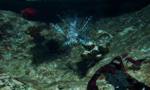 Zdjęcie SZKOCJA / East Scotland / Edinburgh - okolice (Deep Ocean ) / niesamowite formy i kolory podwodnego swiata