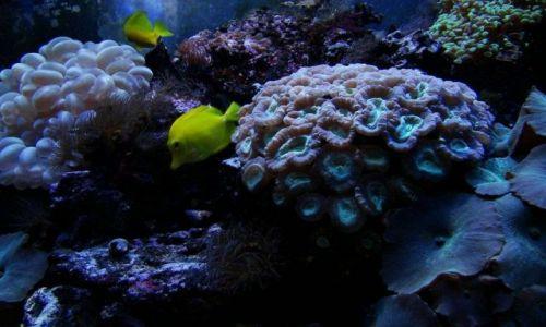 Zdjęcie SZKOCJA / East Scotland / Edinburgh - okolice (Deep Ocean ) / fajnie byloby miec takie akwarium w domu :))