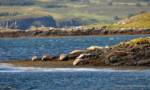 Zdjecie SZKOCJA / Isle of Skye / Dunvegan / Dunvegan