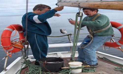 Zdjecie SZKOCJA / Północny Atlantyk / gdzieś na morzu / Makrele na obiad