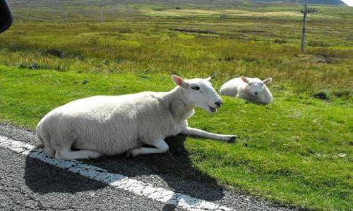 Zdjecie SZKOCJA / - / Skye Island / uczestnicy ruchu drogowego