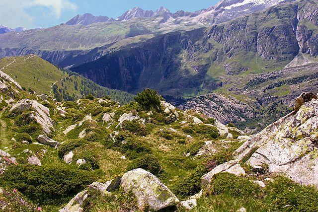Zdjęcia: okolice lodowca Aletsch, Valais, Zieleń otaczająca lodowiec Aletsch, SZWAJCARIA
