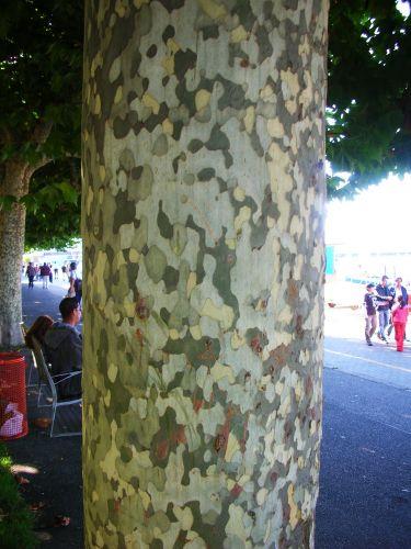 Zdjęcia: genewa, kora o barwach militarnych, SZWAJCARIA