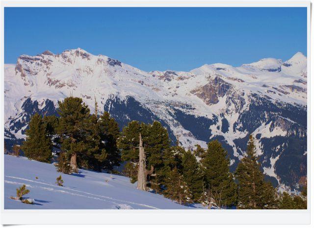 Zdj�cia: griendelwald, wallis, widoczek alpejski, SZWAJCARIA