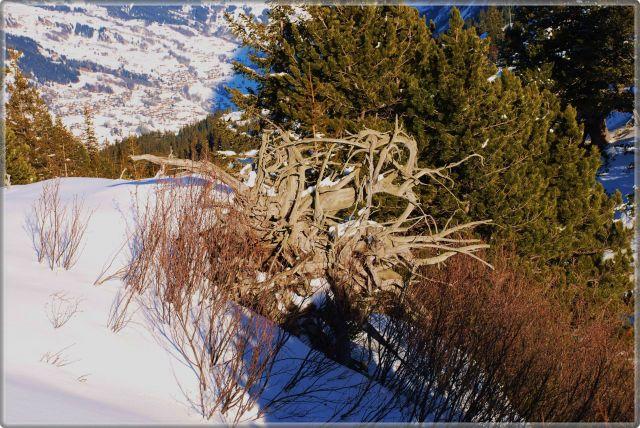 Zdjęcia: alpy, wallis, wybryk natury, SZWAJCARIA