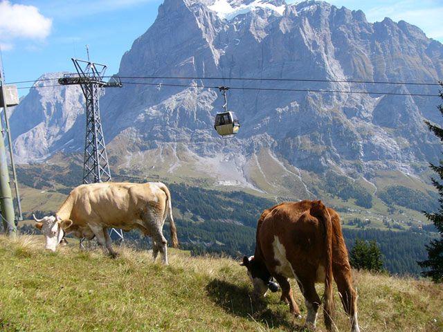 Zdjęcia: Interlaken, Alpy, Milki, SZWAJCARIA