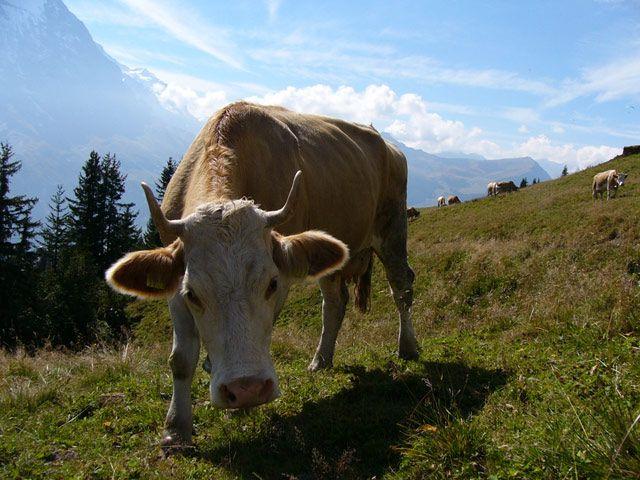 Zdjęcia: Interlaken, Milka, SZWAJCARIA
