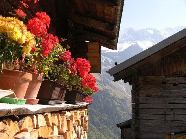 Zdjęcia: Interlaken, Kwiaty, SZWAJCARIA