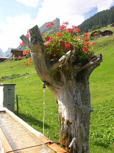 Zdjęcia: Interlaken, Kwietnik, SZWAJCARIA