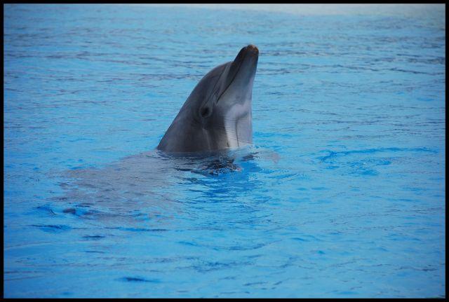 Zdjęcia: lipperswil, delfin, SZWAJCARIA