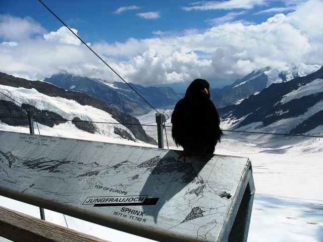 Zdjęcia: Jungfraujoch, xxxxxxxx, SZWAJCARIA