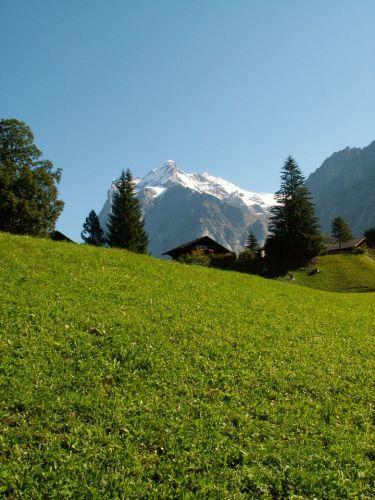 Zdjęcia: Prz kolejce na Jungfraujoch, Typowy krajobraz Szwajcarii, SZWAJCARIA