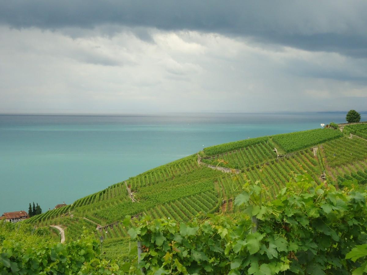 Zdjęcia: Villette, kanton Vaud, Lavaux, SZWAJCARIA