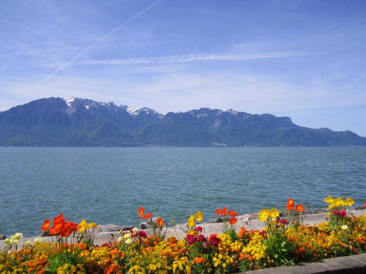 Zdjęcia: Vevey, Vaud, Jezioro Genewskie, SZWAJCARIA