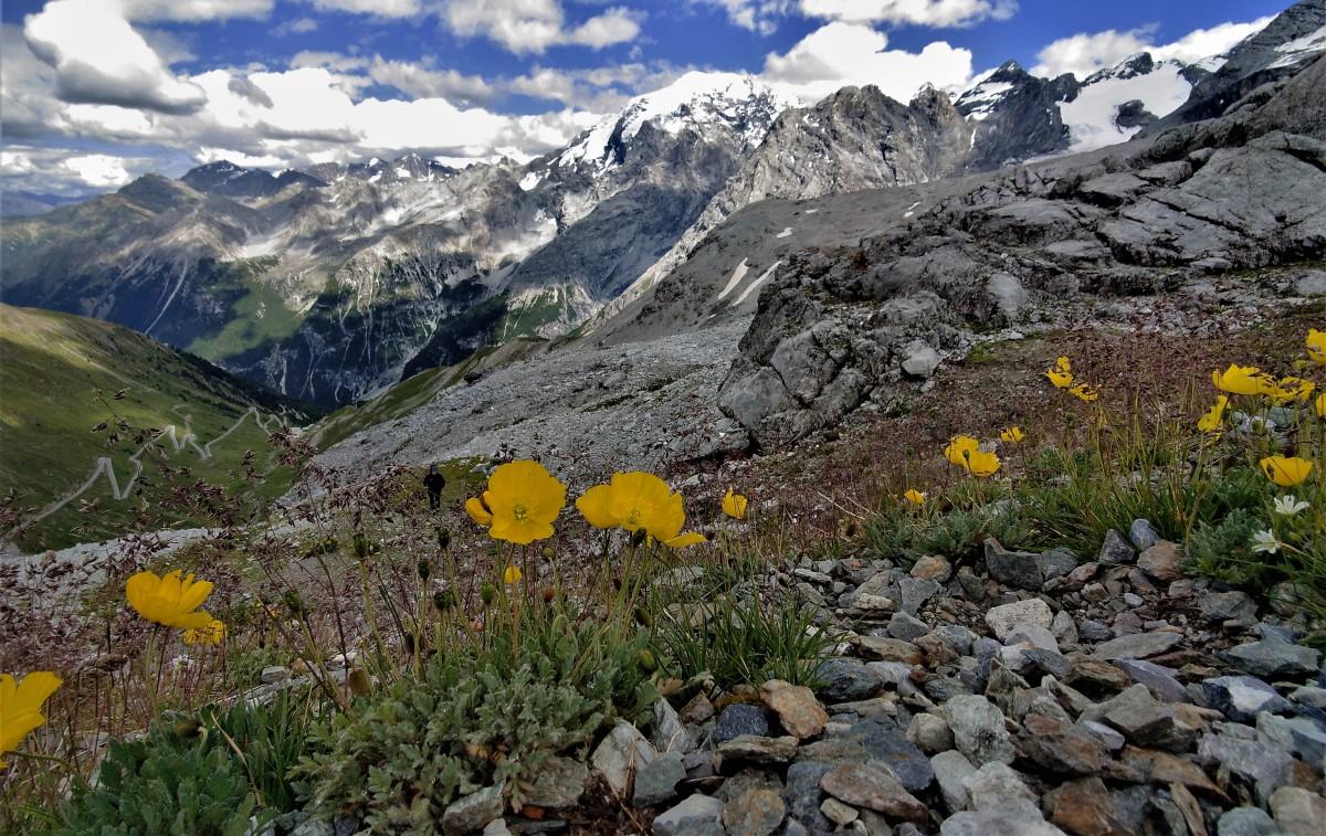 Zdjęcia: Przełęcz Stelvio  ciut wyżej :), alpy, okolice Piz Cotschen, SZWAJCARIA