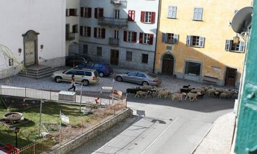 SZWAJCARIA / - / Vicosoprano / Owieczki zwiedzają miasteczko