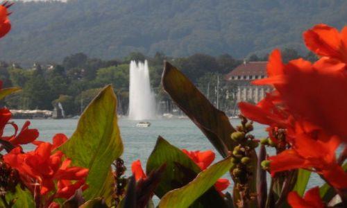 Zdjecie SZWAJCARIA / - / Zurich / Zurichsee