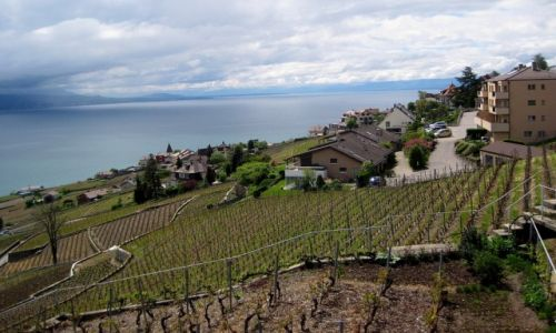 Zdjecie SZWAJCARIA / Lavaux / Montreux area / Lavaux UNESCO HERITAGE