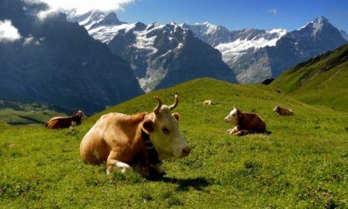 Zdjecie SZWAJCARIA / kanton Berno / okolice Grindelwald / Konkurs - jeszcze tam wrócę