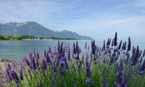 Zdjecie SZWAJCARIA / Monterux / okolice Monterux / Jezioro Genewskie