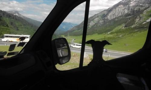 Zdjecie SZWAJCARIA / Aply / szwajcarskie serpentyny / Nietoperek w Szwajcarii
