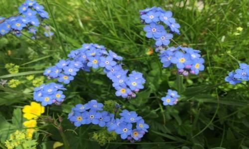 Zdjecie SZWAJCARIA / Kanton Lucerna / Entlebuch / Kwiaty