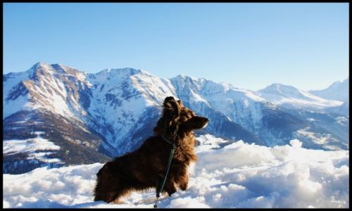 SZWAJCARIA / wallis / Riederalp / alpejski widok
