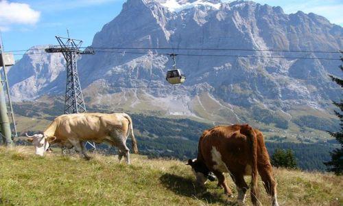 Zdjecie SZWAJCARIA / Alpy / Interlaken / Milki