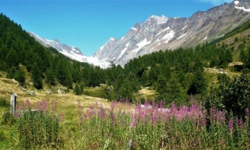 Zdjecie SZWAJCARIA / - / Lotschentaler / Górskie klimaty