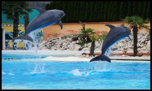 Zdjecie SZWAJCARIA / brak / lipperswil / delfiny