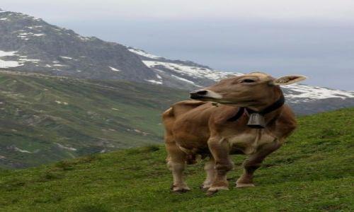 Zdjecie SZWAJCARIA / Jungfrau / Grindelwald / Swiss4