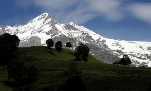 Zdjęcie SZWAJCARIA / Jungfrau / Grindelwald / Swiss6