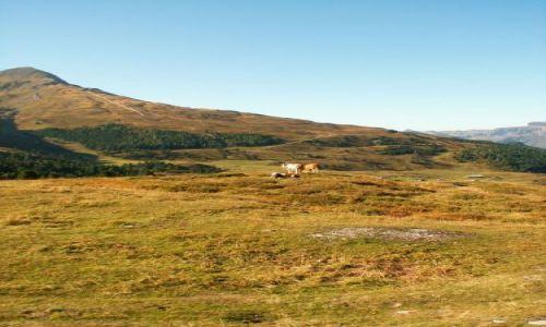 Zdjecie SZWAJCARIA / brak / w drodze do Kleine Scheidegg 2061m / Milka z Alpejsk