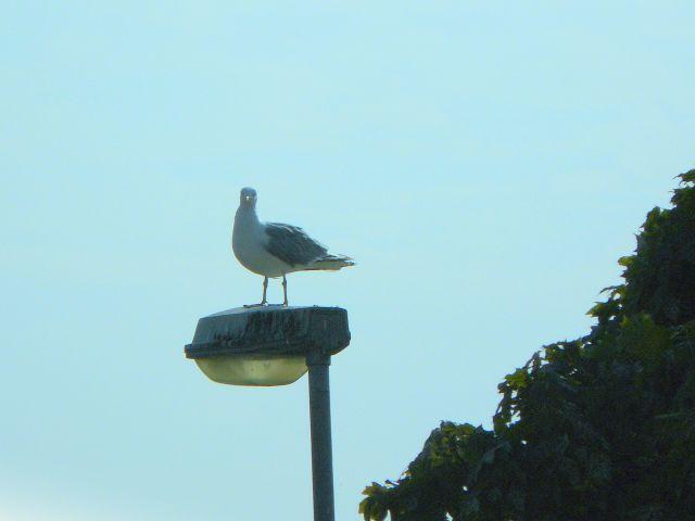 Zdjęcia: Mariefred, Ptaki2, SZWECJA