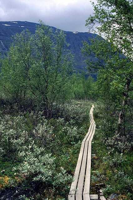 Zdjęcia: Park Narodowy Abisko, Lappland, w ochronie roślinności, SZWECJA