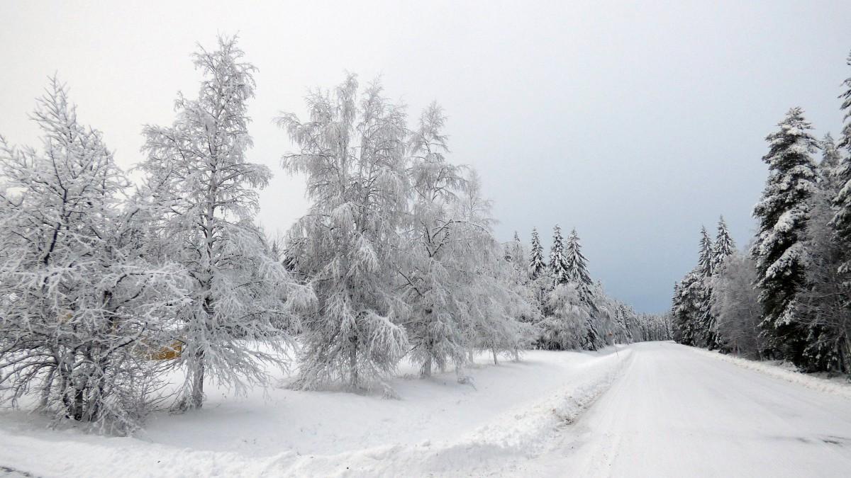 Zdjęcia: Okolice Mala-Laponia, Vasterbotten, Laponia zimą , SZWECJA