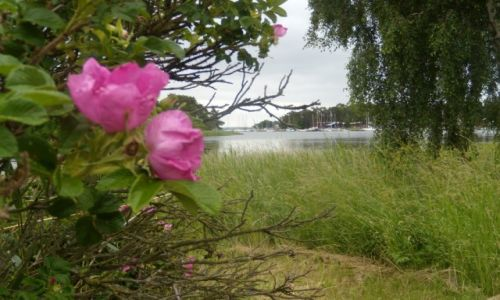 Zdjęcie SZWECJA / Kalmar lan / Kalmar / Rowerem po Szwecji 2011