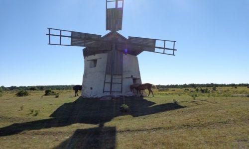 Zdjęcie SZWECJA / Gotlandia / Na pastwisku. / Rowerem po wyspach szwedzkich.