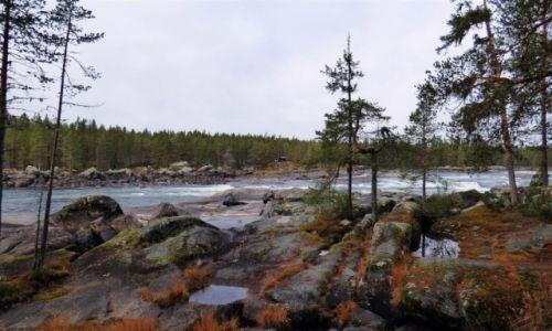 Zdjęcie SZWECJA / Vasterbotten / Okolice Lycksele-Laponia / Nad Vindelalven