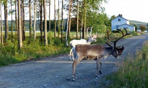 Zdjęcie SZWECJA / Vasterbotten / Okolice Mala-Laponia / W odwiedziny