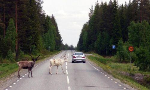 Zdjęcie SZWECJA / Vasterbotten / Okolice Mala-Laponia / Uwaga przechodzimy