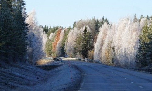 Zdjecie SZWECJA / Vasterbotten / Okolice Lycksele-Laponia / Lapońskie barwy jesieni 2