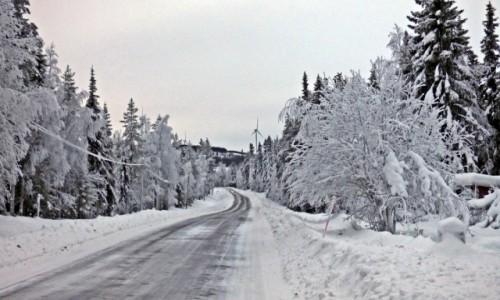 Zdjecie SZWECJA / Vasterbotten / Laponia / LAPOŃSKA ZIMA