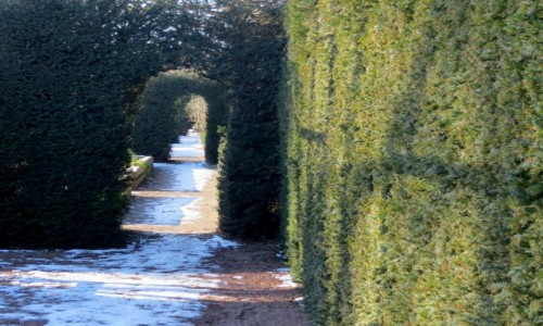 Zdjecie SZWECJA / Skania / Malmo / zima w ogrodzie