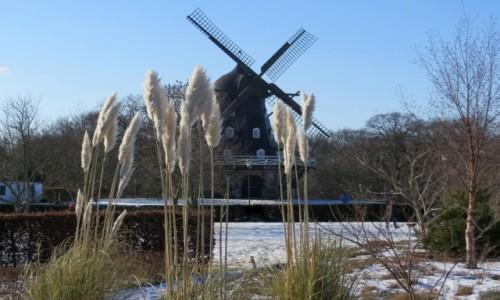 Zdjęcie SZWECJA / Skania / Malmo / jeszcze zimowo...