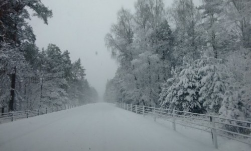 Zdjecie SZWECJA / skania / droga Ystad- kristianstad / okolice Ystad 28.02.2018